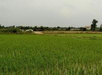 زمین کشاورزی 1000 متری در شیپور-عکس کوچک