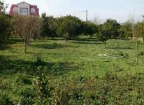 فروش زمین مسکونی 1000 متری مرکبات در ارطه در شیپور-عکس کوچک