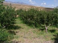 فروش باغ سیب با قیمت مناسب در روستای ایشلق در شیپور-عکس کوچک
