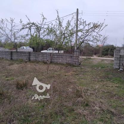 فروش زمین مسکونی 350 متر در رضوانشهر در گروه خرید و فروش املاک در گیلان در شیپور-عکس1
