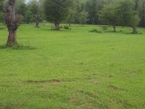 فروش زمین کشاورزی 20000 متر در ساری در شیپور