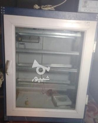 دستگاه جوجه کشی 1200تایی بلدرچین در گروه خرید و فروش صنعتی، اداری و تجاری در زنجان در شیپور-عکس1