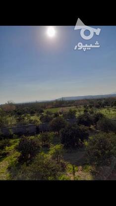 ویلا باغ 2500 متری ، گنج افروز در گروه خرید و فروش املاک در مازندران در شیپور-عکس5