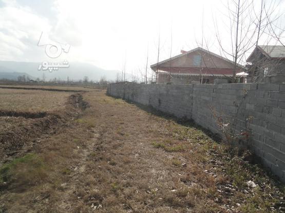333 متر زمین نُقلی در گلرودبار لاهیجان در گروه خرید و فروش املاک در گیلان در شیپور-عکس7