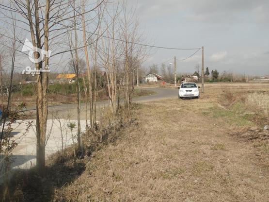 333 متر زمین نُقلی در گلرودبار لاهیجان در گروه خرید و فروش املاک در گیلان در شیپور-عکس5