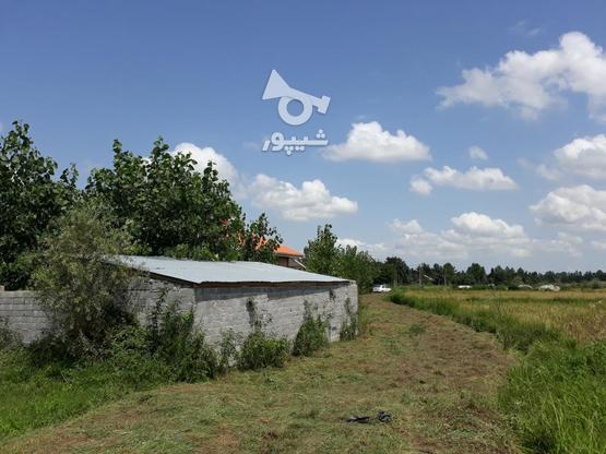333 متر زمین نُقلی در گلرودبار لاهیجان در گروه خرید و فروش املاک در گیلان در شیپور-عکس1