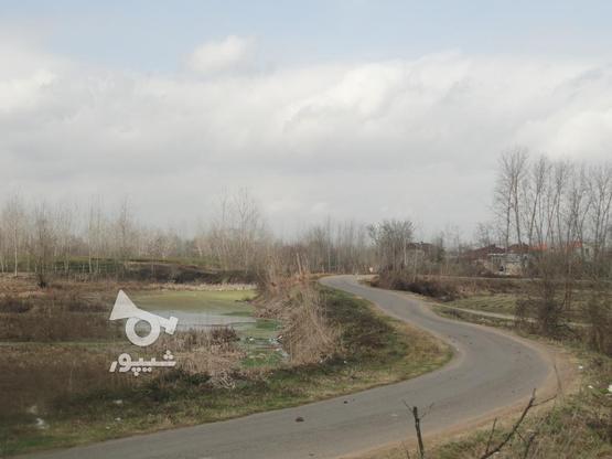 417 متر زمین با چشم انداز تالاب پرندگان در گروه خرید و فروش املاک در گیلان در شیپور-عکس2