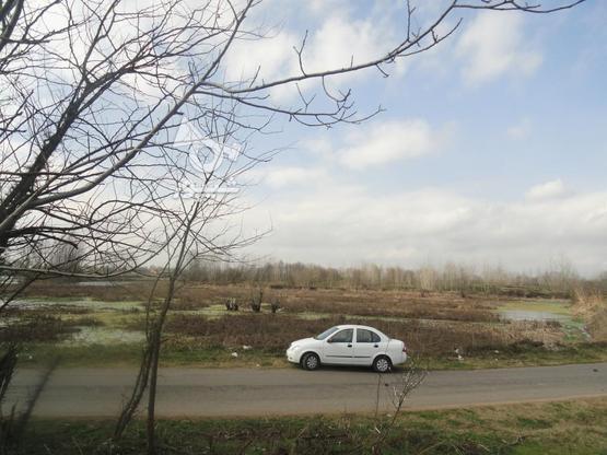 417 متر زمین با چشم انداز تالاب پرندگان در گروه خرید و فروش املاک در گیلان در شیپور-عکس5