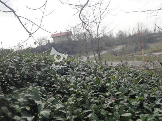 417 متر زمین با چشم انداز تالاب پرندگان در گروه خرید و فروش املاک در گیلان در شیپور-عکس4