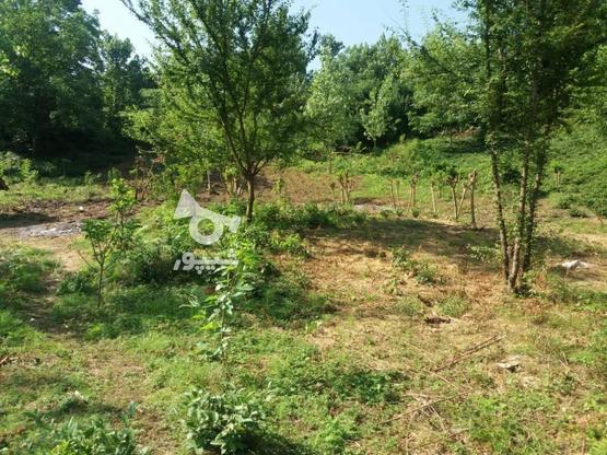 3500 متر باغ زمیدان در گروه خرید و فروش املاک در گیلان در شیپور-عکس1