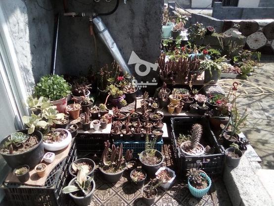 گل و گیاه زینتی  در گروه خرید و فروش لوازم خانگی در گیلان در شیپور-عکس2