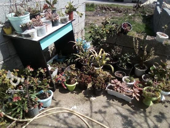 گل و گیاه زینتی  در گروه خرید و فروش لوازم خانگی در گیلان در شیپور-عکس3