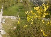 فروش باغ 300 متر در منطقه دارکلا و تجنک  در شیپور-عکس کوچک