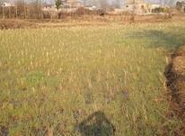 زمین زراعی/ 1258 متری/ خششکبیجار در شیپور-عکس کوچک
