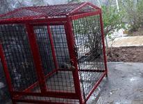 قفس کمیاب ویلایی در شیپور-عکس کوچک