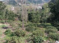3000 متر زمین باغی در املش در شیپور-عکس کوچک