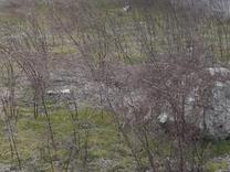 200 متر زمین در منطقه ایی با ویلاهای لوکس  پشت میزبان در شیپور