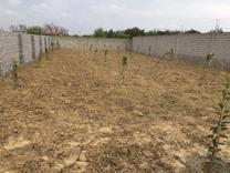 فروش زمین مسکونی 455 متر در بابل در شیپور