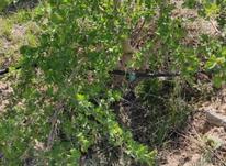 زمین ویلایی سند دار شاهنامه 69 روستای ماریان در شیپور-عکس کوچک
