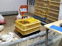 فروش وسایل مرغ فروشی در شیپور-عکس کوچک