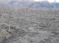 زمین کشاورزی فولادمحله در شیپور-عکس کوچک