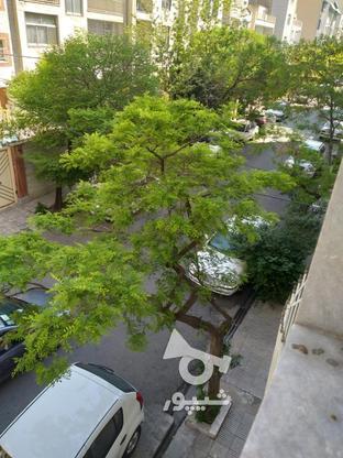 12 متر مغازه یافت آباد غربی بر بلوار معلم در گروه خرید و فروش املاک در تهران در شیپور-عکس1