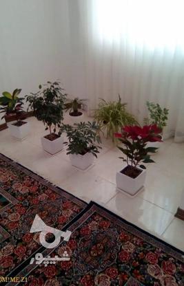 آپارتمان 81متری درمیدان جهاد خ آزاده  در گروه خرید و فروش املاک در همدان در شیپور-عکس3