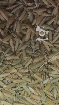 چلتک برنج دم سیاه  در گروه خرید و فروش خدمات و کسب و کار در لرستان در شیپور-عکس1