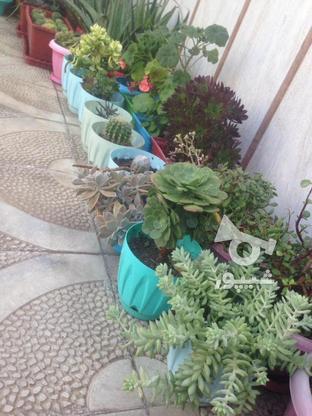 گل و گلدان  در گروه خرید و فروش لوازم خانگی در تهران در شیپور-عکس7