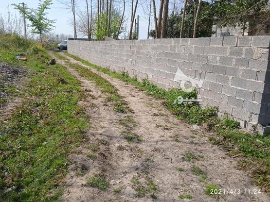 زمین روستایی مسکونی 340 متر/ خشکبیجار / روستا ویشکا در گروه خرید و فروش املاک در گیلان در شیپور-عکس1