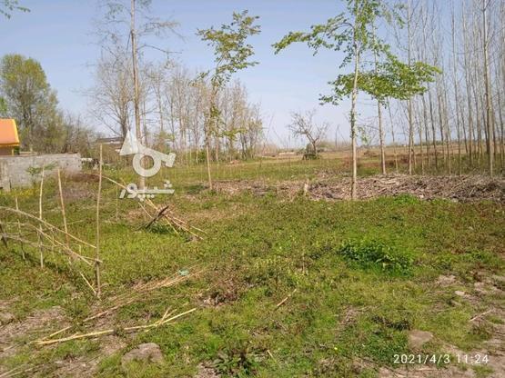 زمین روستایی مسکونی 340 متر/ خشکبیجار / روستا ویشکا در گروه خرید و فروش املاک در گیلان در شیپور-عکس2