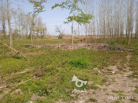 زمین روستایی مسکونی 340 متر/ خشکبیجار / روستا ویشکا در گروه خرید و فروش املاک در گیلان در شیپور-عکس3