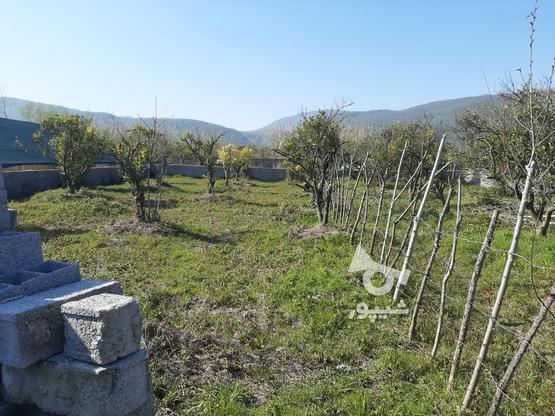 زمین 370 متری خوش قواره چشم انداز عالی چالوس روستای پیچیده در گروه خرید و فروش املاک در مازندران در شیپور-عکس4
