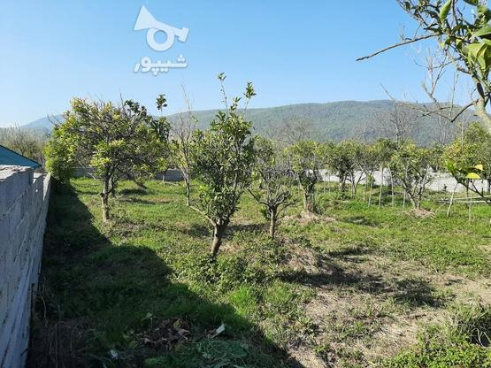 زمین 370 متری خوش قواره چشم انداز عالی چالوس روستای پیچیده در گروه خرید و فروش املاک در مازندران در شیپور-عکس1