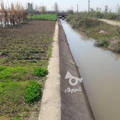 فروش زمین شالیزار سند دار در گروه خرید و فروش املاک در گیلان در شیپور-عکس4