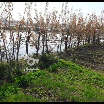 فروش زمین شالیزار سند دار در گروه خرید و فروش املاک در گیلان در شیپور-عکس2