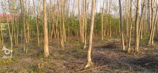 4000 متر زمین براتوبان درپنج کیلومتری آستانه اشرفیه در گروه خرید و فروش املاک در گیلان در شیپور-عکس5