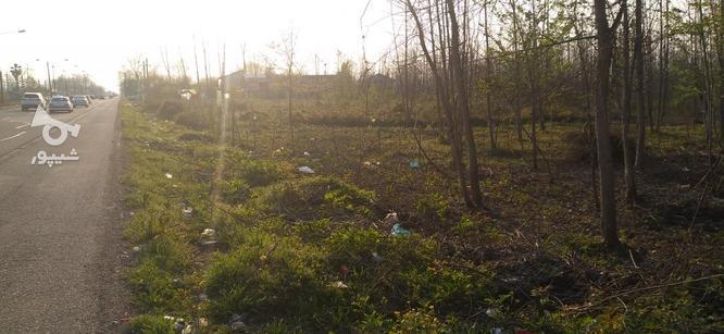 4000 متر زمین براتوبان درپنج کیلومتری آستانه اشرفیه در گروه خرید و فروش املاک در گیلان در شیپور-عکس1