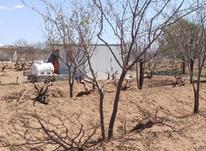 فروش زمین کشاورزی 800 متری کنار عوارضی در شیپور-عکس کوچک
