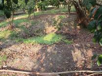 باغ  53000 متر در جاده قاءمشهر  در شیپور