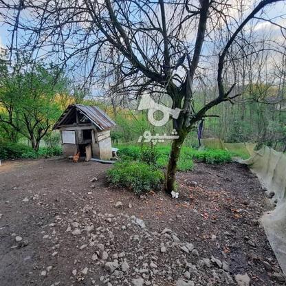 فروش زمین مسکونی 4000 متر در زمیدان در گروه خرید و فروش املاک در گیلان در شیپور-عکس4