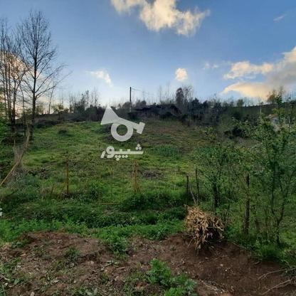 فروش زمین مسکونی 4000 متر در زمیدان در گروه خرید و فروش املاک در گیلان در شیپور-عکس8