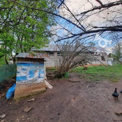 فروش زمین مسکونی 4000 متر در زمیدان در گروه خرید و فروش املاک در گیلان در شیپور-عکس7