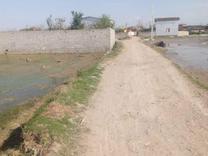 فروش زمین کشاورزی 6000 متر در جاده آمل به فریدونکنار در شیپور