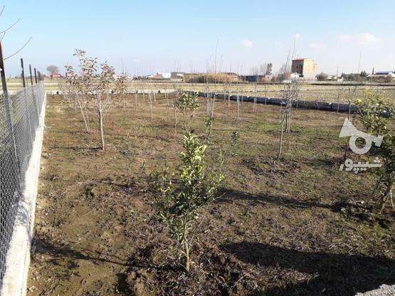 فروش زمین خونه باغی در گروه خرید و فروش املاک در مازندران در شیپور-عکس2
