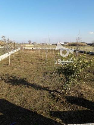 فروش زمین خونه باغی در گروه خرید و فروش املاک در مازندران در شیپور-عکس6