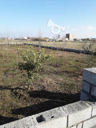 فروش زمین خونه باغی در گروه خرید و فروش املاک در مازندران در شیپور-عکس4