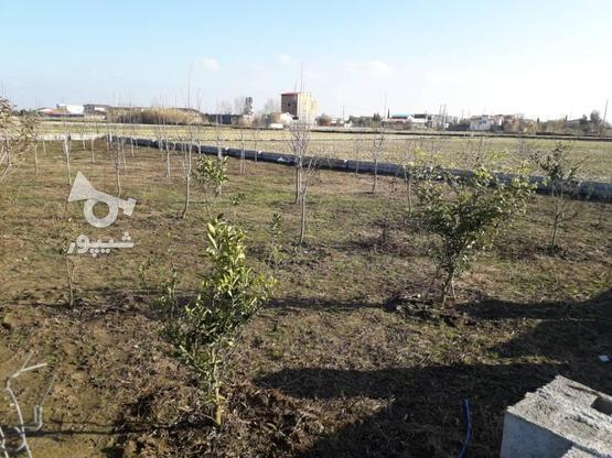 فروش زمین خونه باغی در گروه خرید و فروش املاک در مازندران در شیپور-عکس1