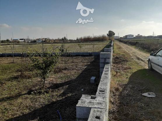 فروش زمین خونه باغی در گروه خرید و فروش املاک در مازندران در شیپور-عکس5