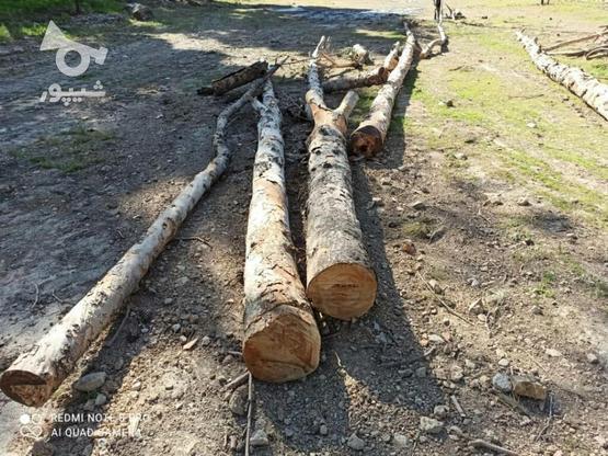 خریدار چوب در گروه خرید و فروش خدمات و کسب و کار در تهران در شیپور-عکس2